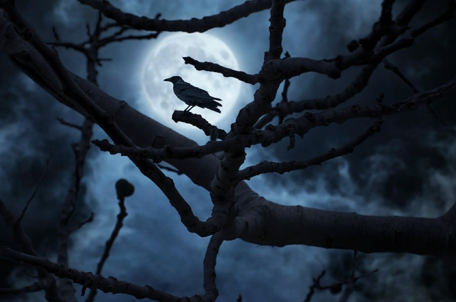 nyctophobia fear of the dark - dark night with silhouette of raven on a tree branch