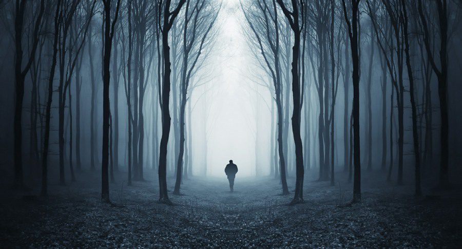 xylophobia is the fear of trees or woods - dark forest image