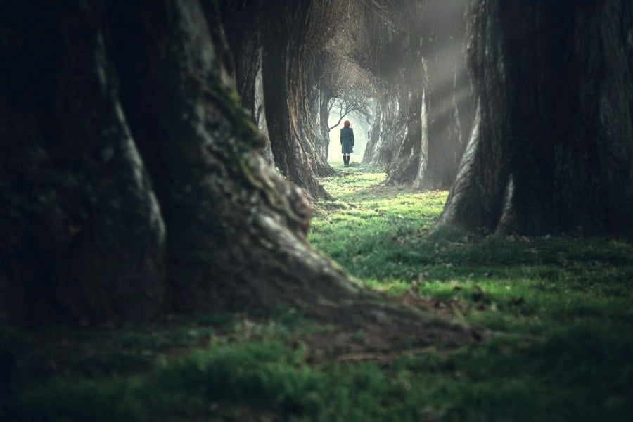 Fear of Forests Xylophobia - alone in the woods